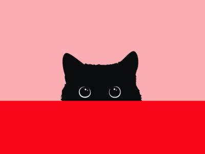 Curioso come un gatto
